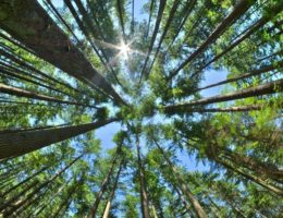 Timber Conservation and Oregon's Constitution Shouldn't Be at Odds